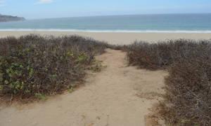 Beach Sand Dunes Stock Photo DSC 0179 by annamae22