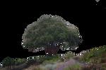 Hillside Landscape Premade Background Stock PNG