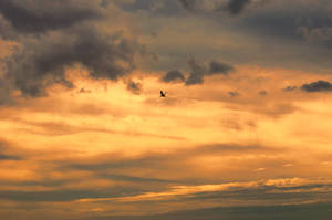 Sunset Sky Stock With Bird and Textures DSC 0650 by annamae22