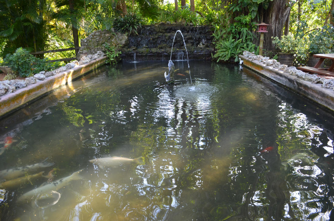 Koi Fish Pond Fountain Stock Photo Wideview By Annamae22