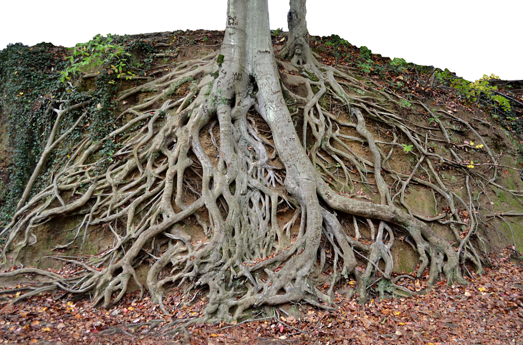 Giant Tree Roots Tree Trunk PNG Stock Photo 0150 by ...