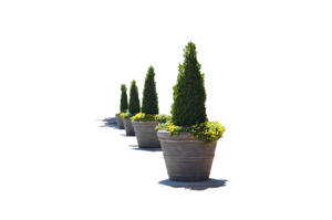 Flower Pots in a Row PNG Stock Photo 0124 by annamae22