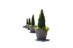 Flower Pots in a Row PNG Stock Photo 0124