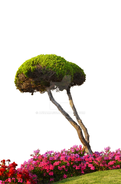 Round tree W flowers Grass PNG Stock Photo 0223