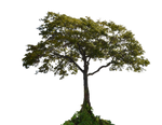 Tree PNG Stock Photo  0001