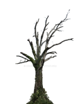 Dead Tree PNG Stock Photo 0098 With Ivy (2)