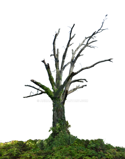 Dead Tree PNG Stock Photo 0098 With GroundCover