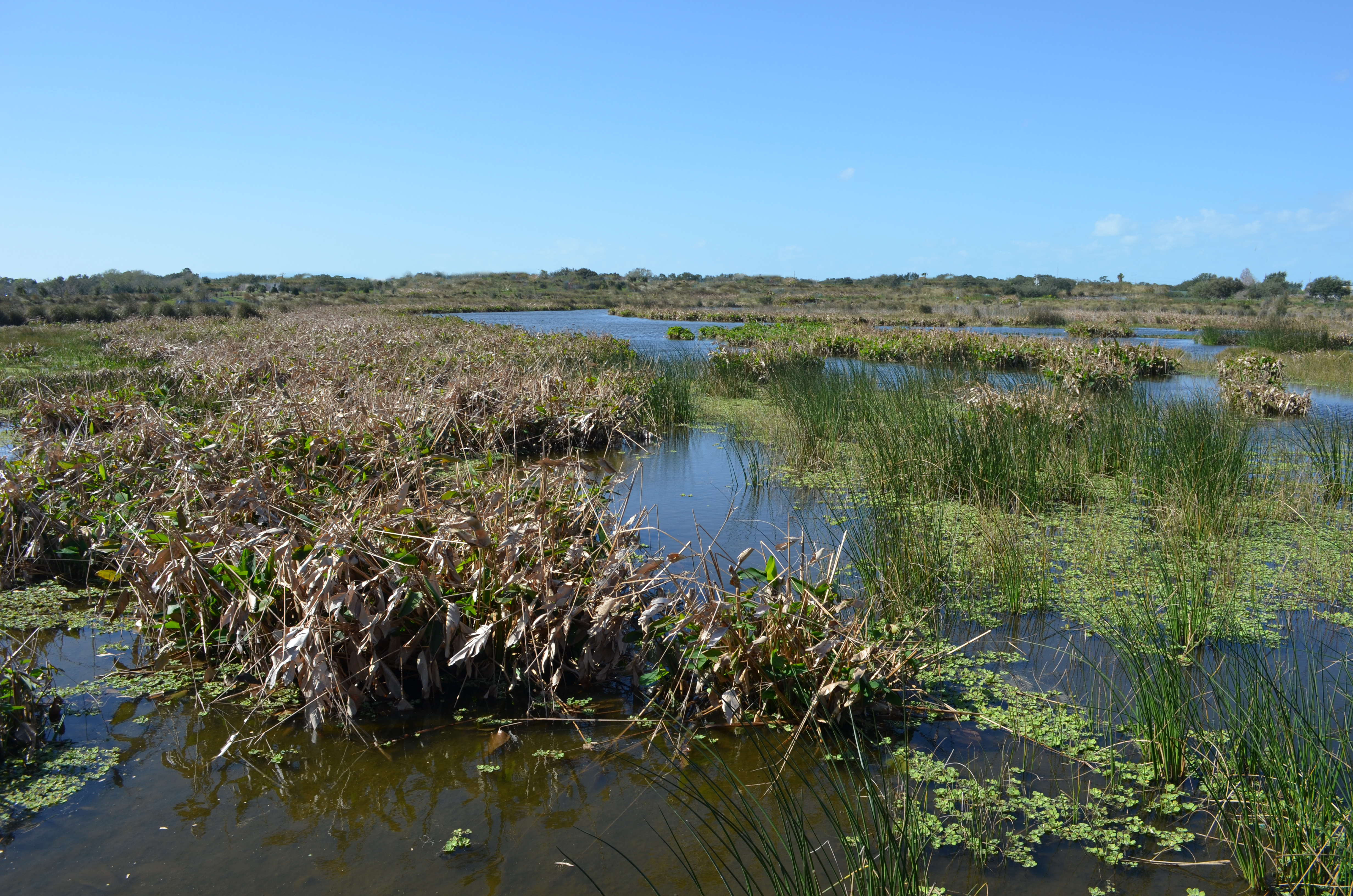 little river wetland project great marsh essay A wetland is not just alien to human life it provides little basis for a life beyond subsistence one may hunt or forage there, but a wetland is not solid enough to allow farming or.