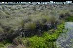 Marsh-Wetlands PNG Background Stock Photo 0376