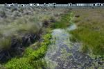 Marsh-Wetlands PNG Background Stock Photo 0379