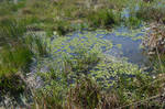 Marsh Wetlands LillyPond Background Stock 0331 FAV