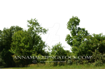 Trees and Bush's PNG Stock Photo 0070