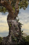 Twisted Tree Premade-Background Stock 0716 With