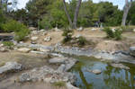 Rock Pond in Forest Background Stock 0157