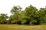 Forest clearing background PNG stock 0075 (2) copy