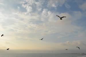 Birds in Flight Sky Stock Photo 0335 Orig