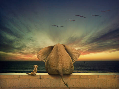 Annie and the Elephant