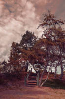 Forest Clearing Staircase 0197 red by annamae22