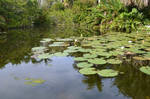 Lily Pond Stock Photo 0325