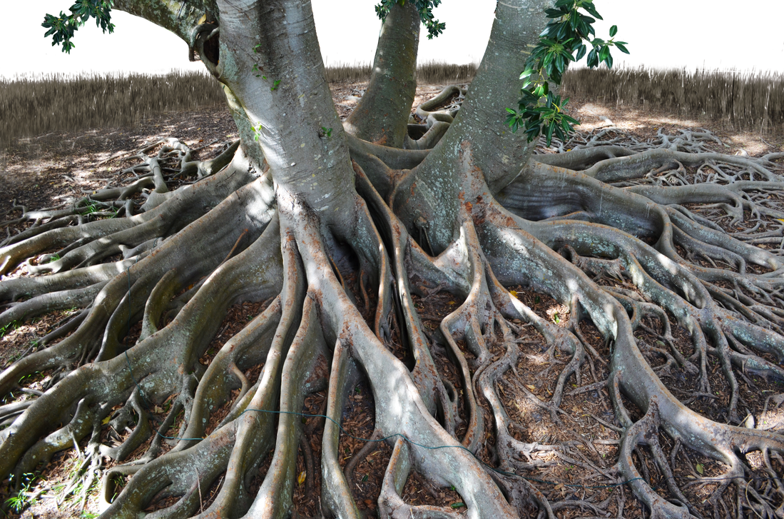 Mangrove Tree Roots PNG with Grass 0069 by annamae22 on ...