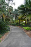 Tropical Jungle Path Background Stock 0390