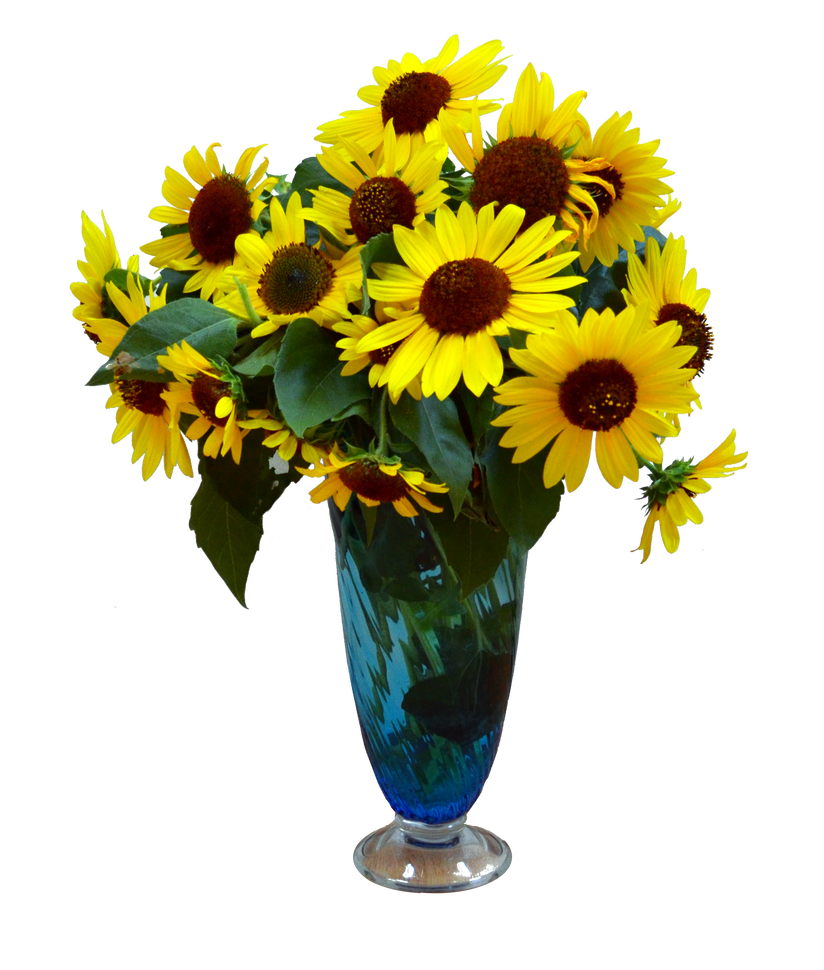 Sun Flowers In Vase Png Stock Photo 0049 By Annamae22 On Deviantart