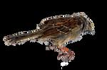 Dead Bird PNG Stock Photo 0458