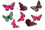 Butterfly Collection PNG Stock Photos 0043 copy 2