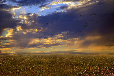After The Storm Lg fly away home birds 1