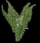 Fern Foliage PNG Stock Photo 2081 cc1