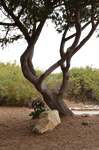 Tree in Landscape PNG Stock Photo 0115 CA park