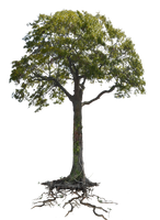 Tree n Roots PNG Stock  Lake 1077 cc2 copy 3 by annamae22