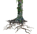 Tree Trunk Roots with Ivy PNG Stock Photo 1077