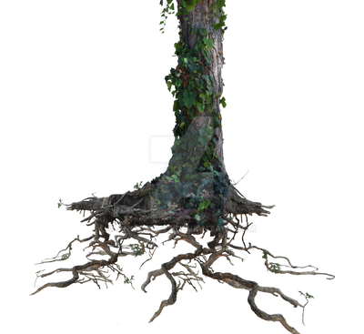 Tree Trunk Roots With Ivy Png Stock Photo 1077 By Annamae22 On Deviantart
