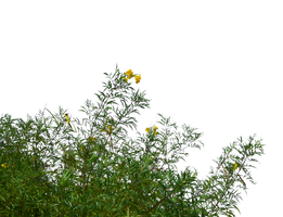 Wild Flowers and Grass PNG Stock Photo 0183 cc2 by annamae22