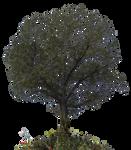 Church Tree PNG Stock Photo 0022