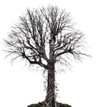 Dead Tree with Vines PNG Stock Photo 0036 copy 6