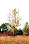 Autumn Field PNG Background Stock Photo 0032
