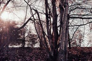 Dark Forest Background Stock 0242 Violet