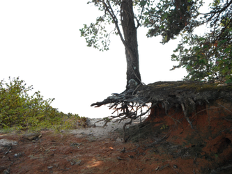 Hanging On PNG Cliff Background Stock 1057 Foliag by annamae22