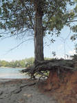 Tree n Roots Background Stock Photo 1078 Vertical