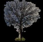 Barren Winter Tree PNG Stock Photo 0131 Orig
