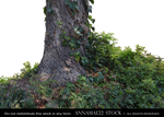 Tree with Ivy PNG Stock Photo 0720 -2