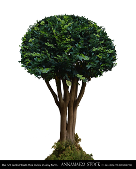 Round Cape Myrtle Tree PNG Stock Photo 0070