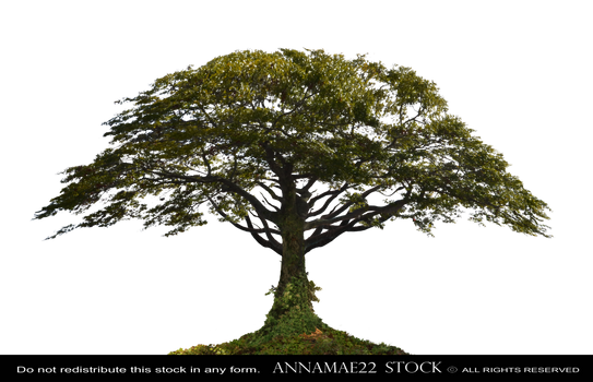 African Tree PNG Stock Photo 0098-0001GroundCover