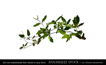 Forest Leaves and Branchs Ground Plant PNG Stock P