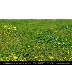 Field of Grass and Yellow Flowers PNG Stock Photo