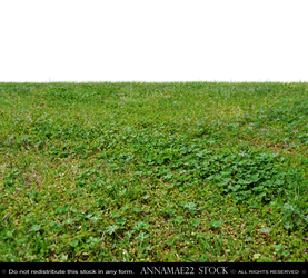 Field of Grass and Clover PNG Stock Photo 0367 Ann