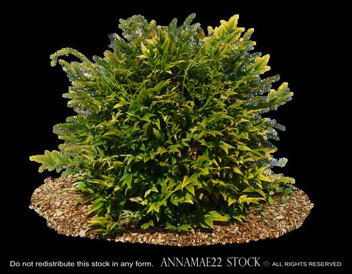 Wild Bush-Plant PNG Stock Photo 0156 Rough-Cut