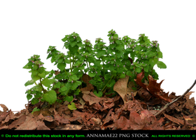 Little Green Forest Plant PNG Stock Photo 0314